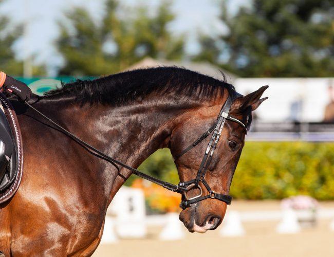 evasion-loisirs-tours.com_USA_horse-5799370_1280